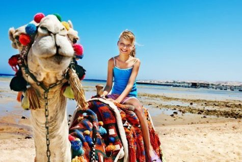 camel in egypt