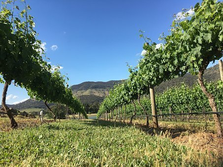 Yarra Valley Vine Vineyard