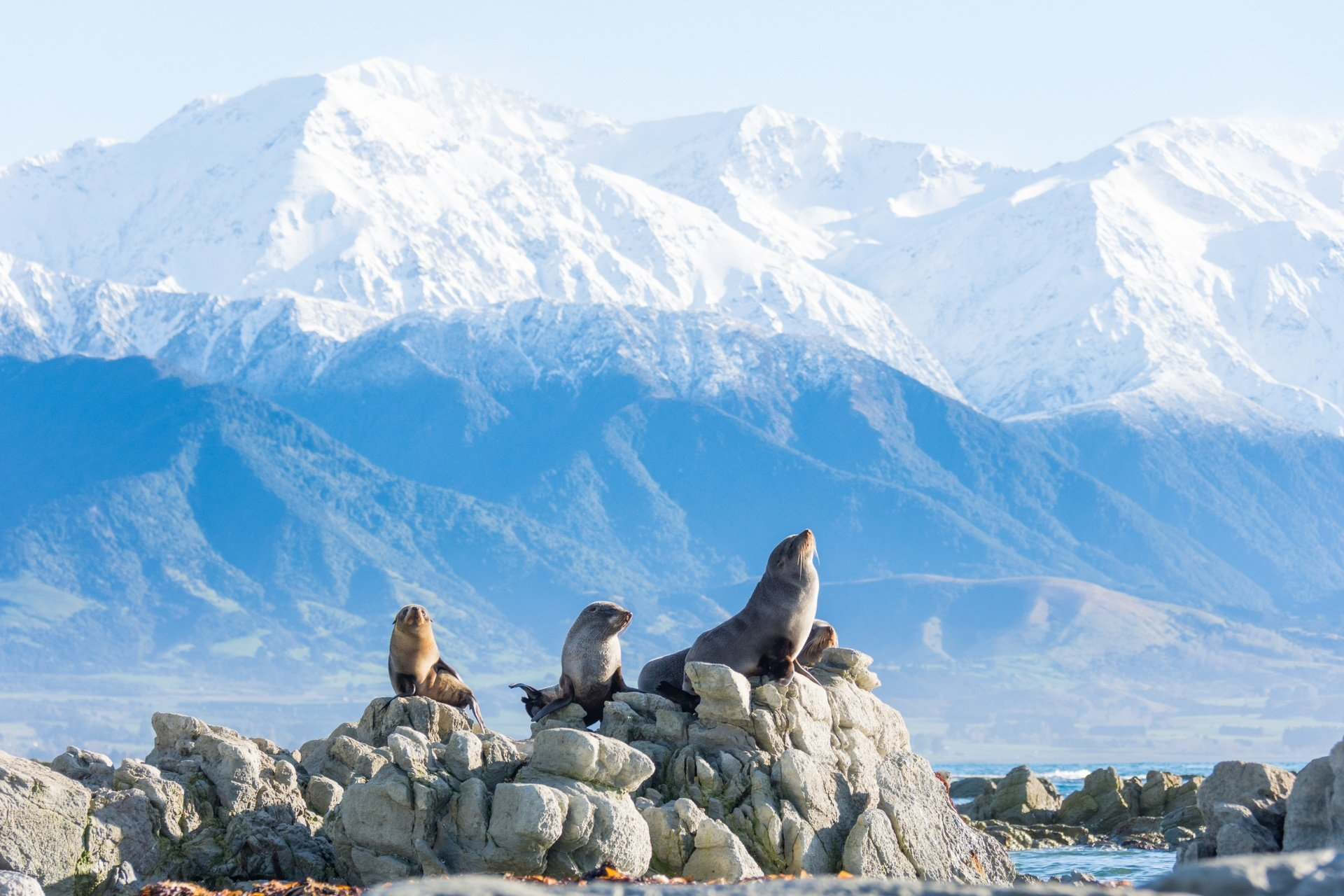Kaikoura Canterbury New Zealand