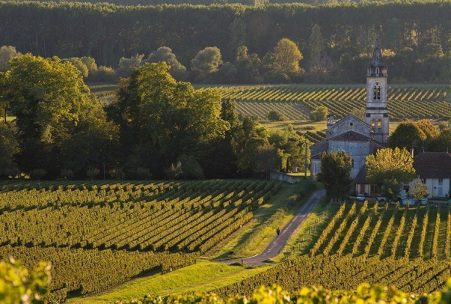 Sauternes Vineyard, France